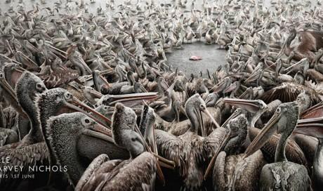Harvey Nichols: Pelicans